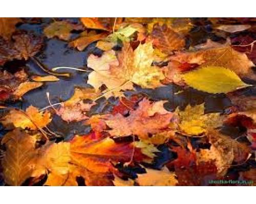 Чому не можна спалювати опале листя?