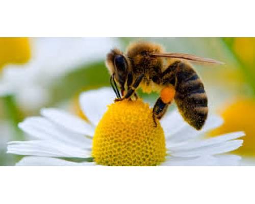 До уваги суб'єктів господарювання, що проводять діяльність у галузі бджільництва.