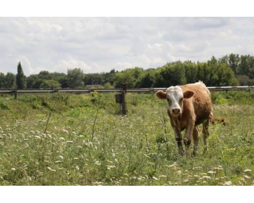 В області стартувало приймання документів від фермерів на бюджетну дотацію за утримання корів