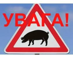 Стережись!!! Африканська чума свиней!!!